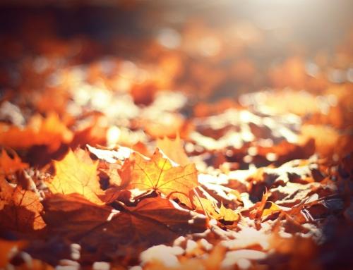 Your Alberta Fall Gardening Checklist